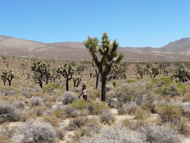 cactusj.jpg